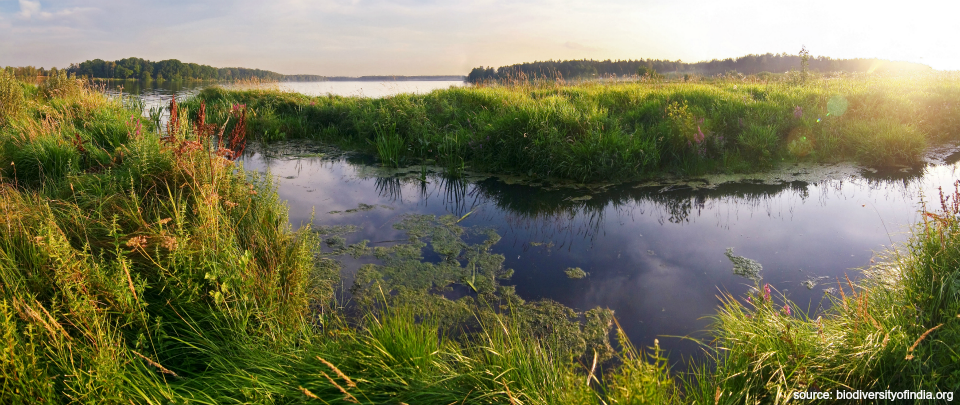 World Wetlands Day Special - Are Wetlands Vital for the Future of Humanity?