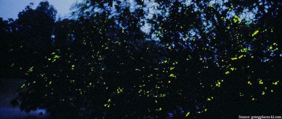 Sinaran Cahaya Kelip Kelip