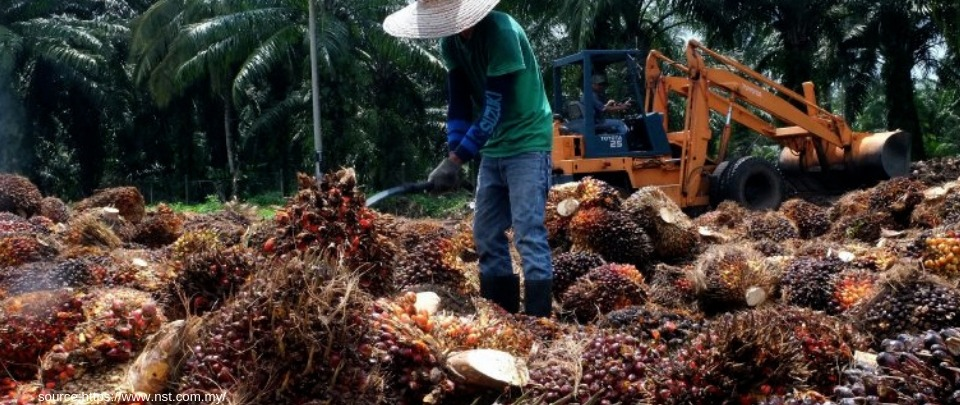 Palm Oil Export Agreement Adds to Good News on Trade
