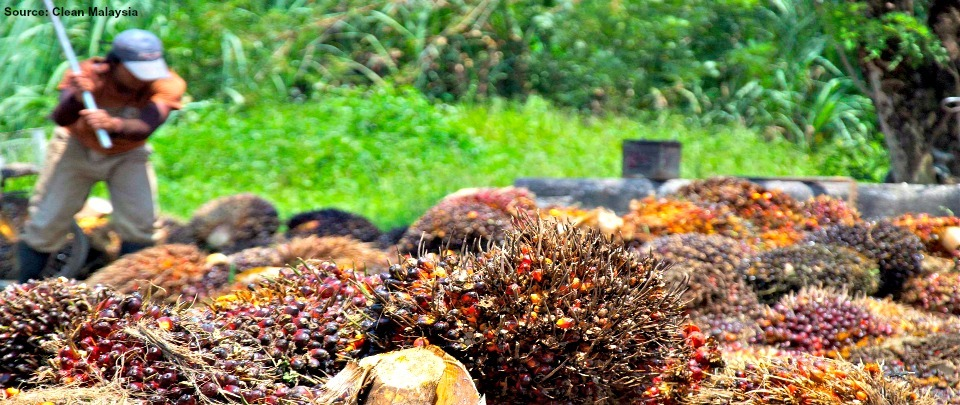 RSPO Vs MSPO in Quest to Save Trees