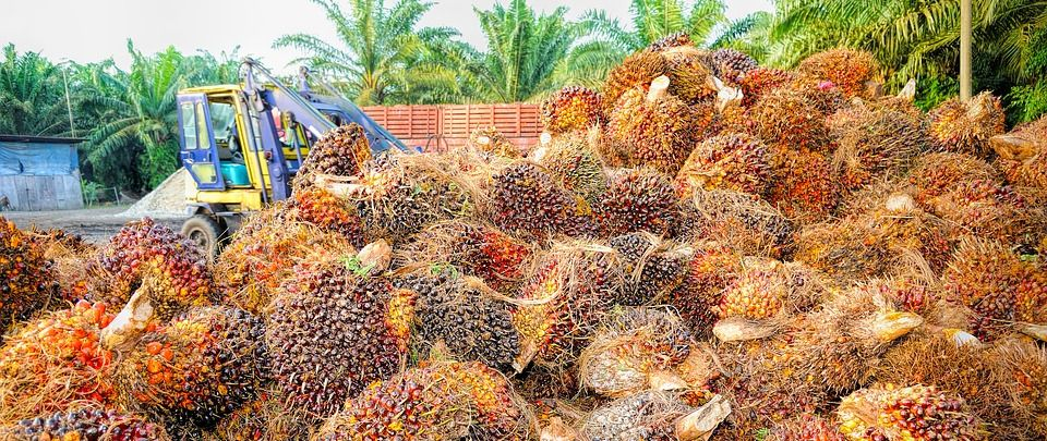 Palm Oil's RSPO - Still Sustainable?