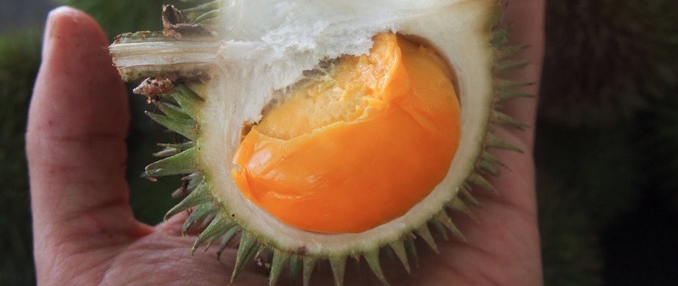 Careers Unusual: The Durian Connoisseur