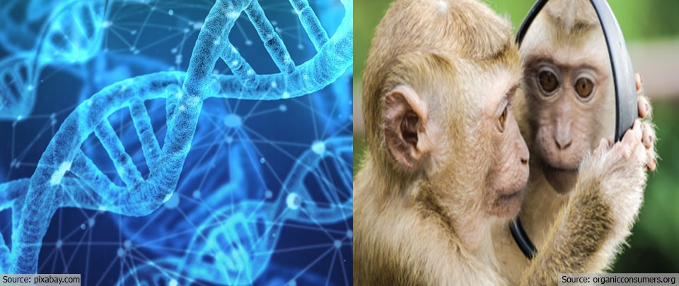 The Daily Digest: Planet of the Humanzee