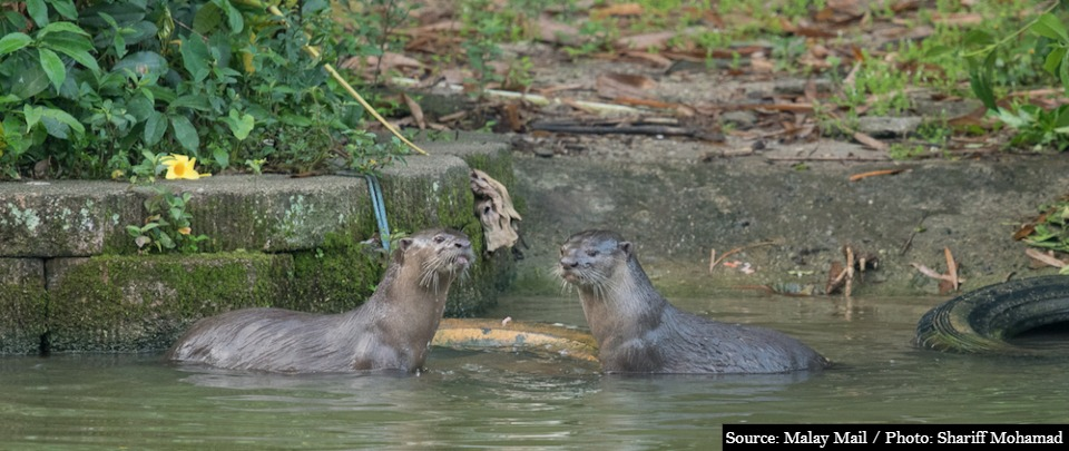 In Otter News