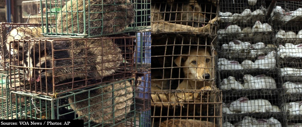 A cauldron of contagion - why the ban on wildlife markets should be permanent