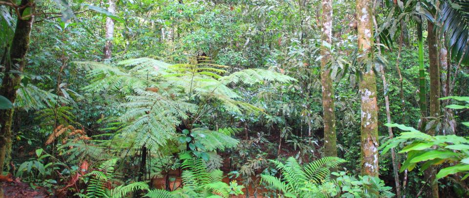 A Resounding No to Degazette Kuala Langat Forest Reserve