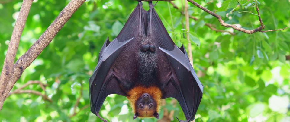 Bats: