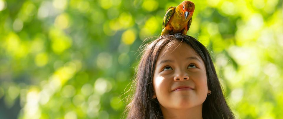 Birds Free Malaysians?