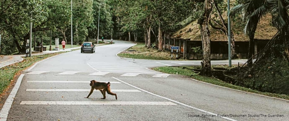 The Daily Digest: KL's Macaque Muggers