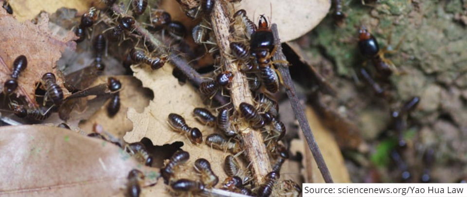 The Daily Digest: Termites, Not As Bad As You Think