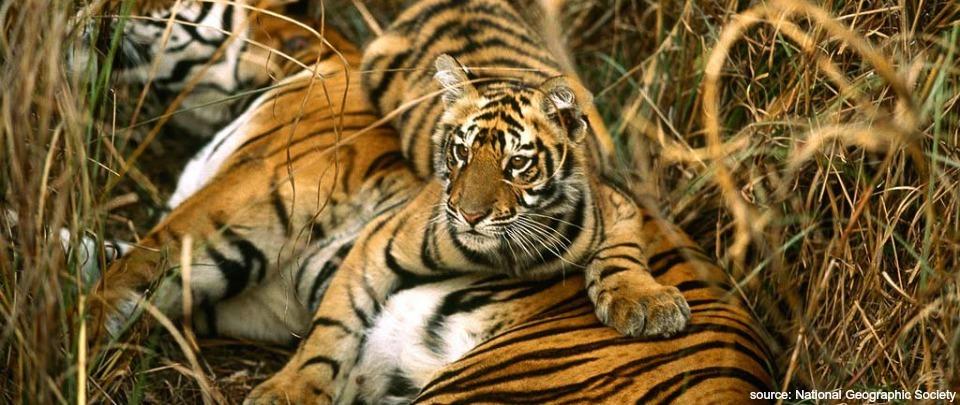 Wildlife Conservation in Myanmar with Antony Lynam