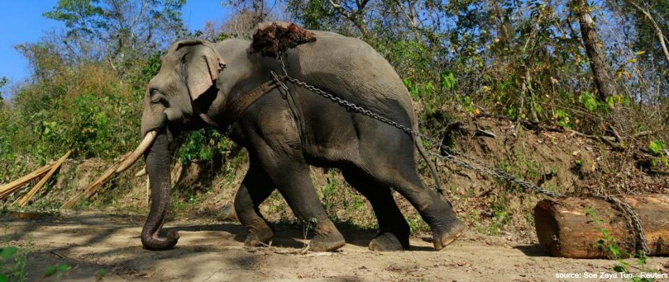 Wildlife Conservation in Myanmar