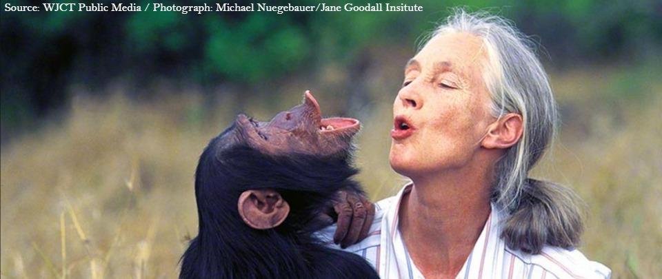 Jane Goodall's Reasons For Hope