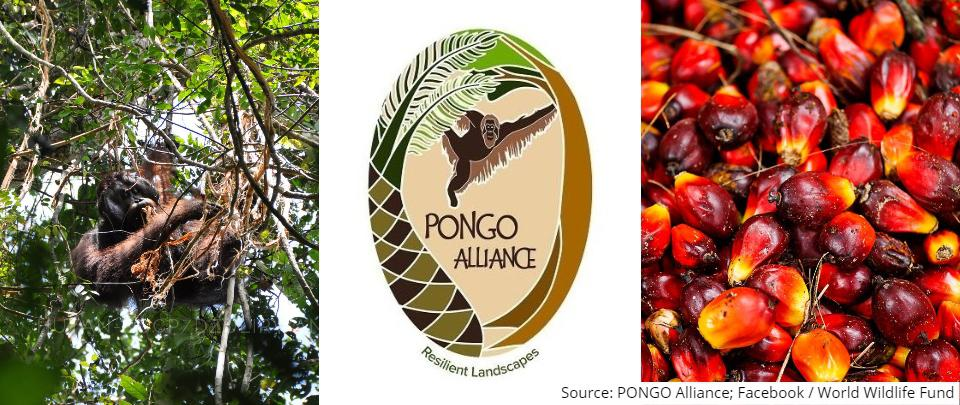 The PONGO Alliance