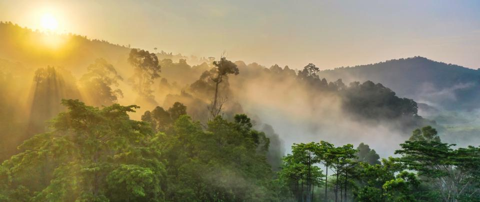 Restoring Rainforests in Malaysia