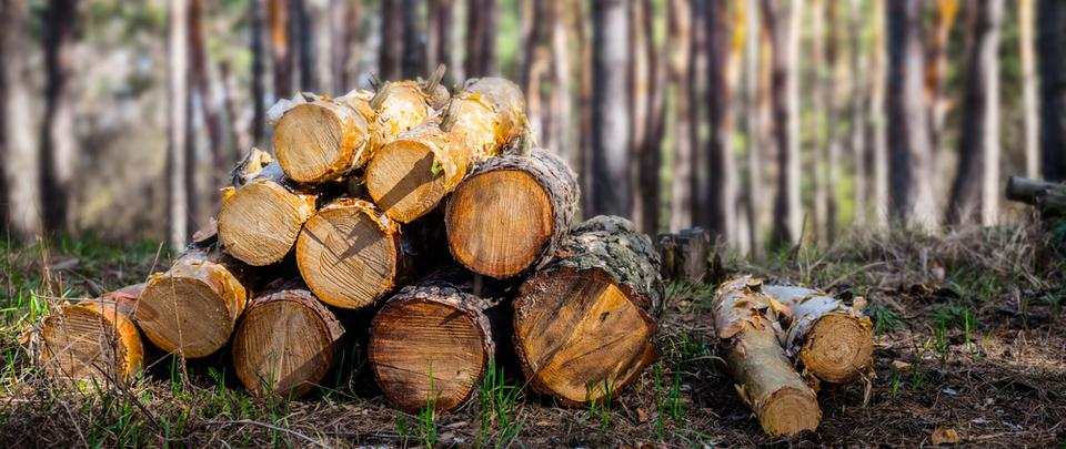 Forest Files Findings Part 2: Is Sustainable Logging Sustainable?