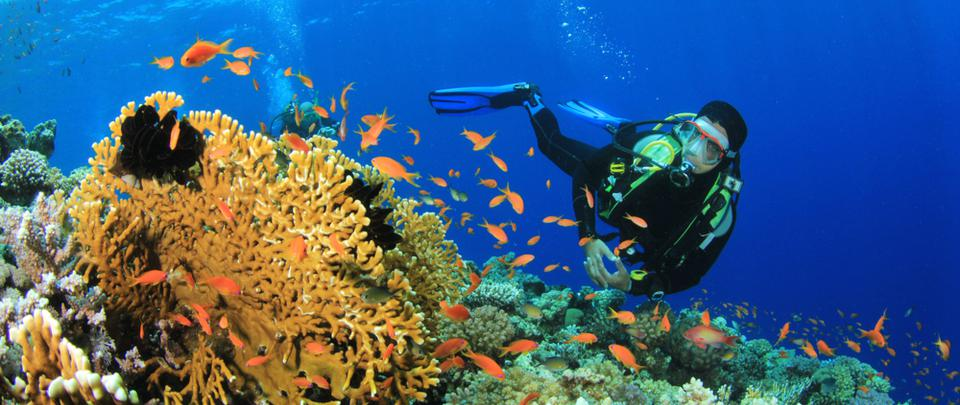 Coral Triangle Day 2021: Coral Conservation and Community Resilience