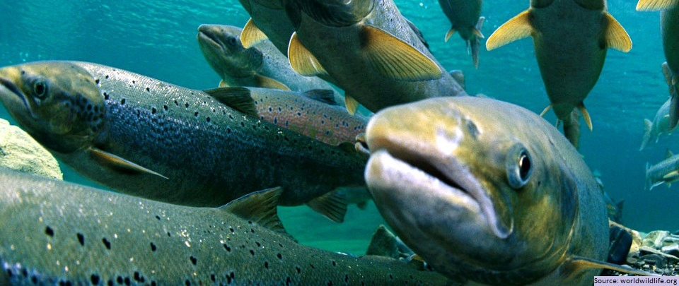 World Oceans Day Special: Sustainable Seafood