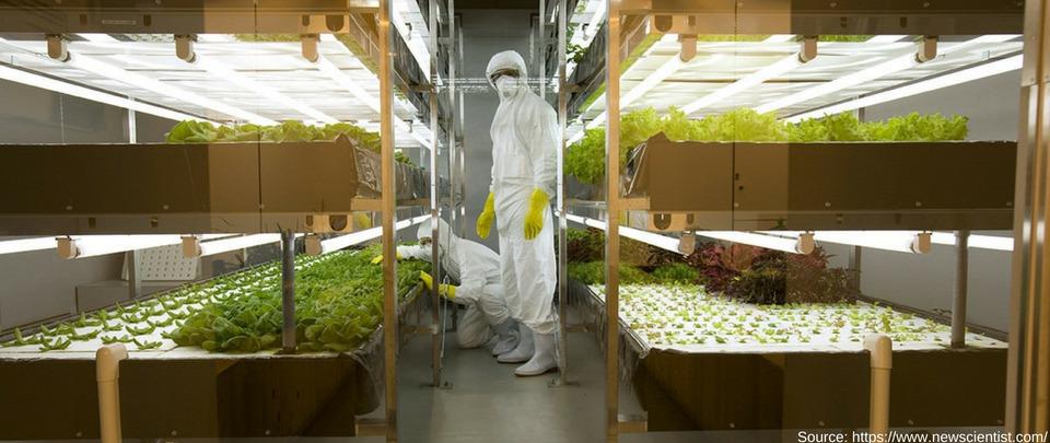 Move Over GMO, Gene-Edited Crops Are Here