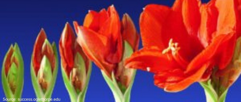 Late Bloomers Can Be More Successful