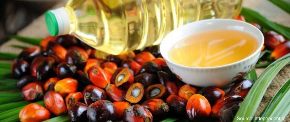 Palm Oil Prices Lowest In Five Months
