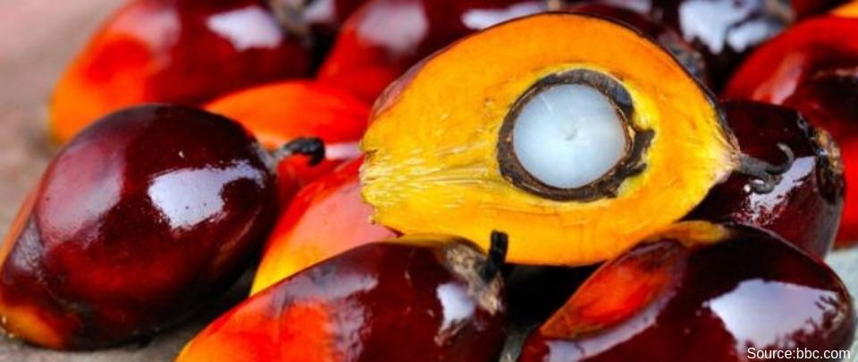 Palm Oil's Perception War