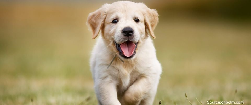 Dog Medicine Sales Shoot Up In South Korea