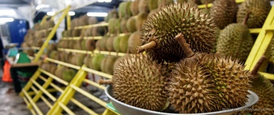 Durian Prices Slashed by 50%