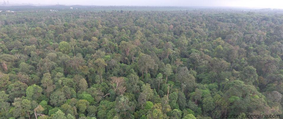 Kuala Langat Forest Degazettement Threatens Orang Asli Rights