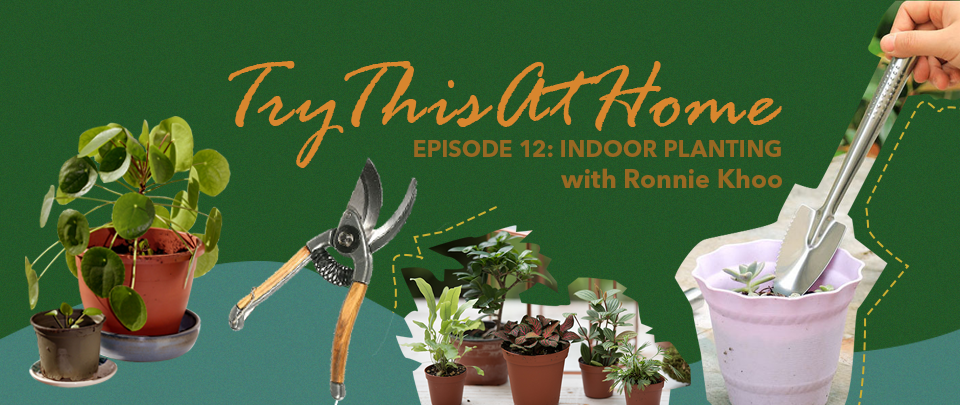 Try This At Home #12: Indoor Plants