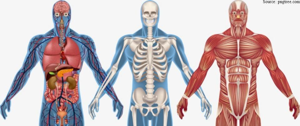 Health News Digest: The Human Body