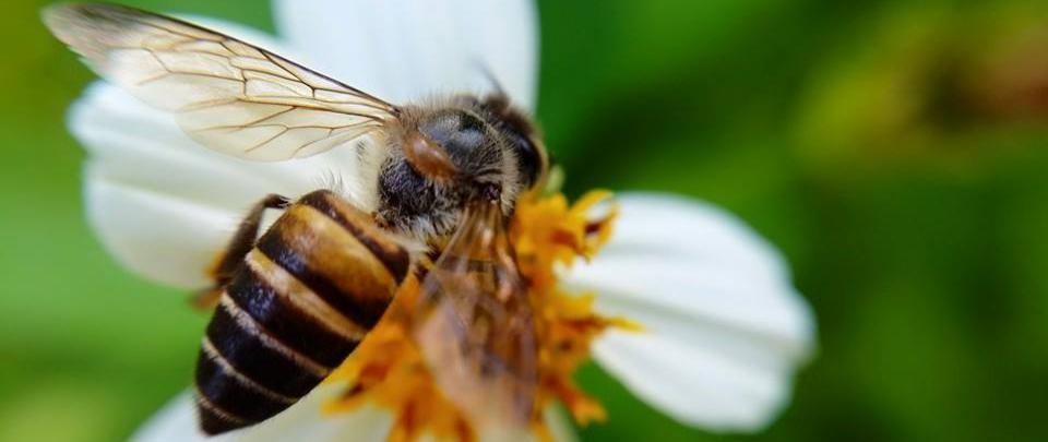 Bee Engaged, Be Better for Bees