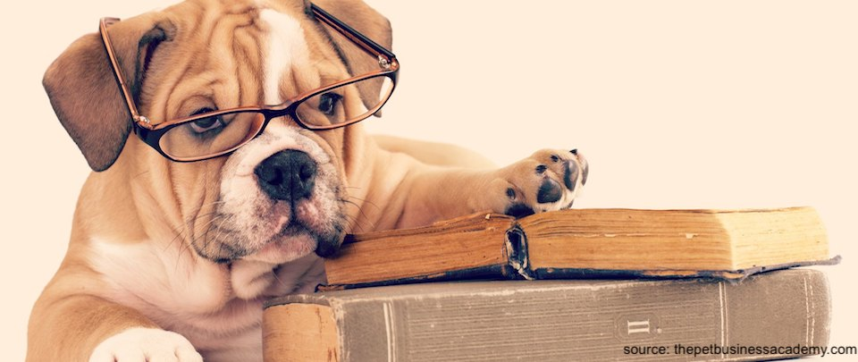 The Psychology of Dogs