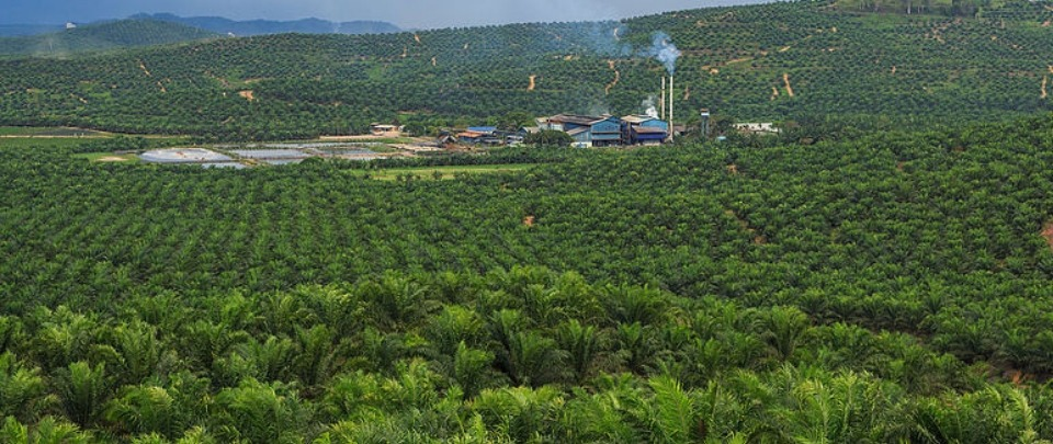 Palm Oil Recovery in Sight for 2020