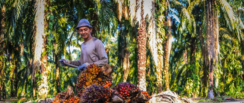 Palm Oil - More Upside?