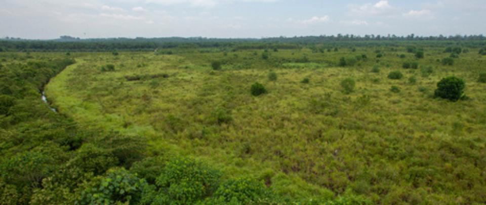 Flip flop Of Selangor's Degazettement Of Kuala Langat Reserves