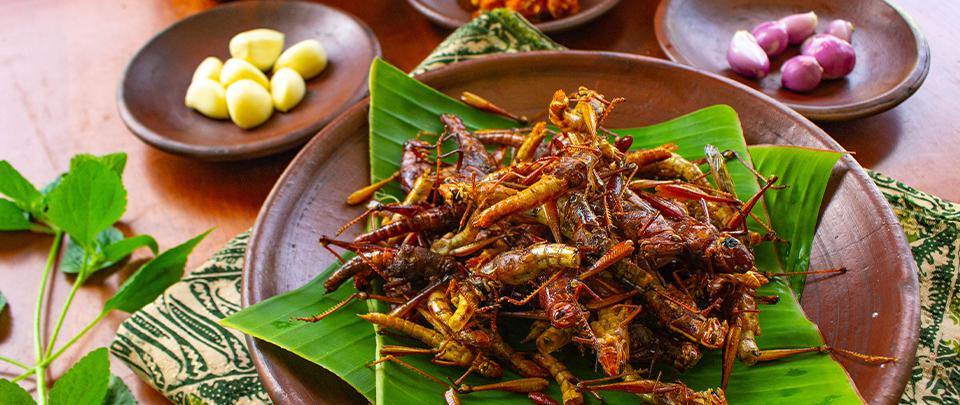 The Law of Crunchy Crickets