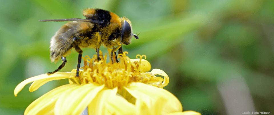 Of Flies and Men