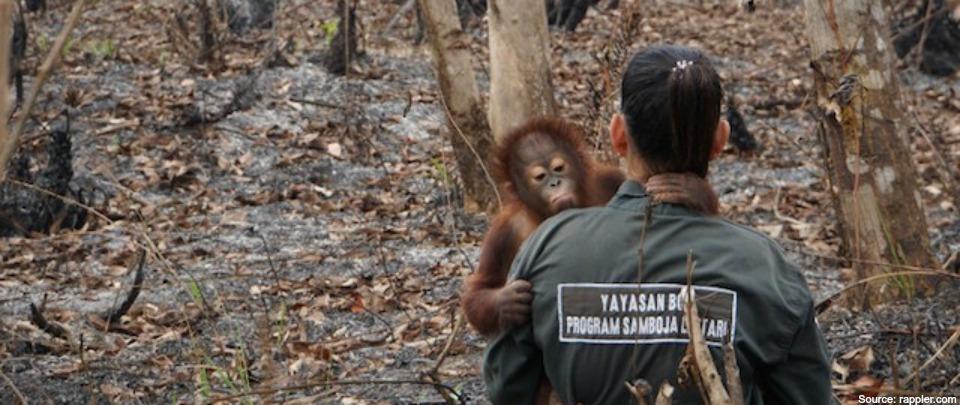 Haze: Orangutan Habitat at Risk