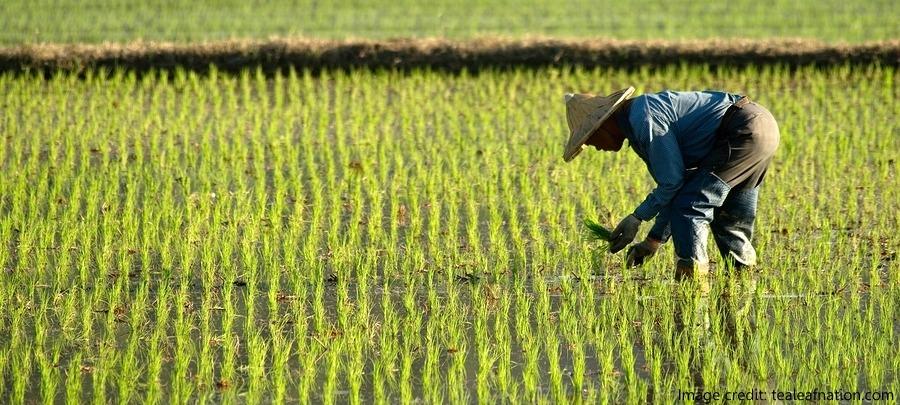 Organic Farming in China