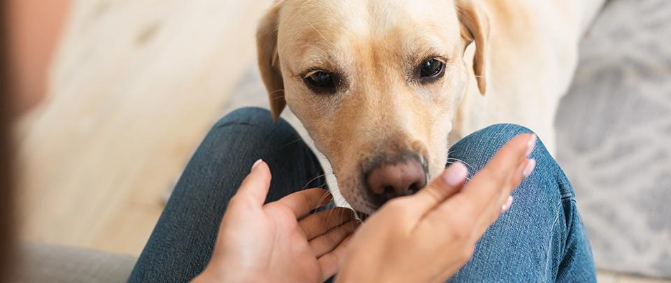 Dogs Paw-sibly Sniffing Out Covid-19