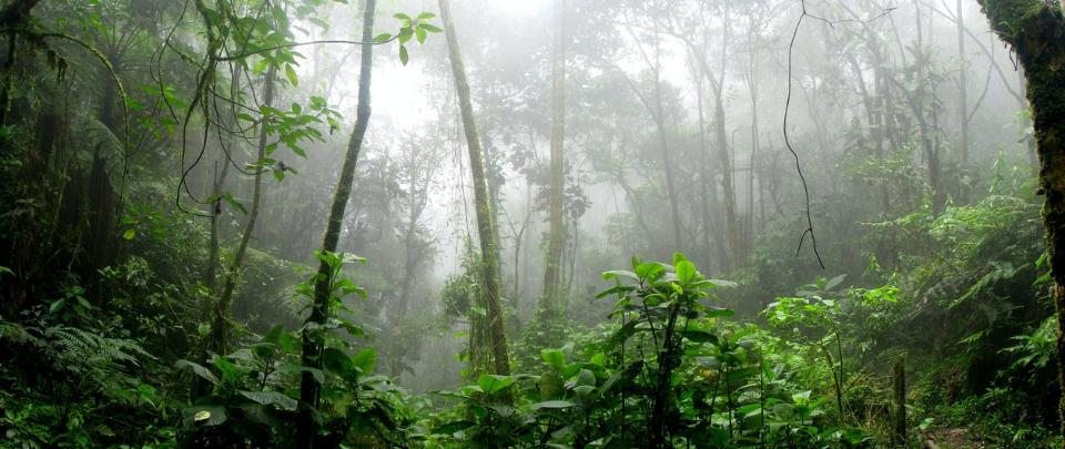 Selangor's Motivations To Degazette Forest Reserve