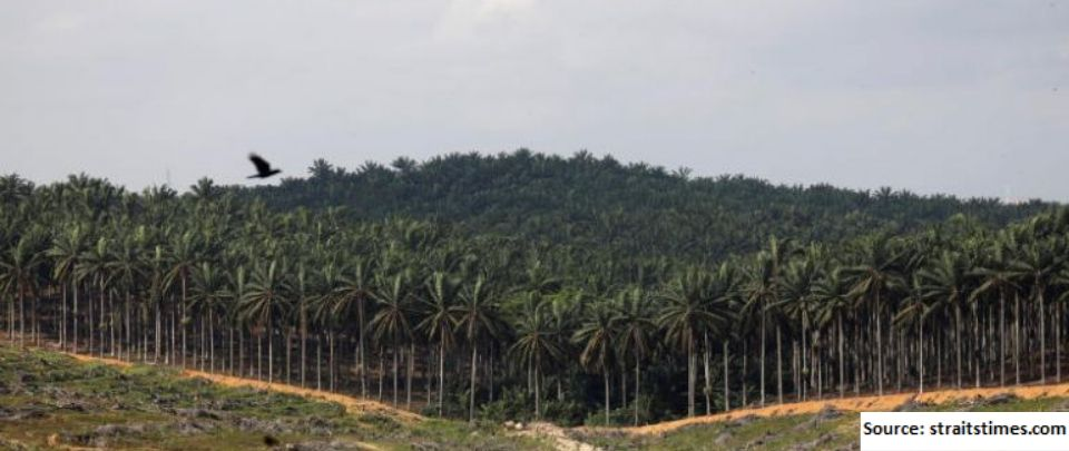 The Plantation Sector Results Disappoint Again