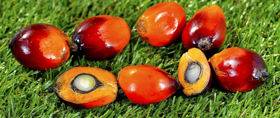 Palm Oil Plays To Watch Out For