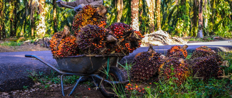 Palm Oil Prices Not Correlated With Share Price