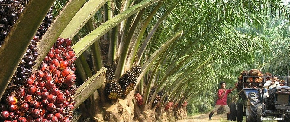 Countering the EU Ban of Palm Oil in Biodiesel